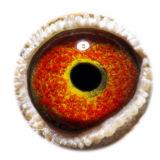 BE17-4058340_eye