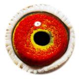 BE17-5058246_eye