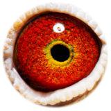 BE14-4263950_eye