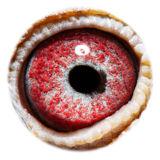 BE16-4118539_eye