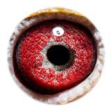 BE16-4118568_eye