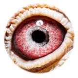 BE17-4058201_eye