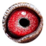 BE17-4240596_eye
