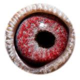 BE17-4243967_eye