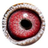 BE17-4243968_eye