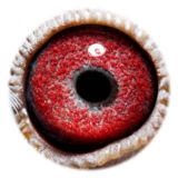 BE17-4243978_eye